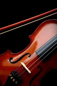 Violin - photography of music.
