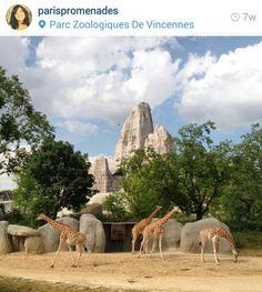 Zoo france