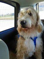 Ohana Dog_Blog: Cane di otto anni in adozione