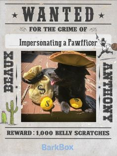 "Beaux's a wanted little man with a big attitude. He impersonated a Pawfficer and took all the money from the ruff dogs who robbed the local bank. He says ""There's a new Sheruff in town boys."" http://ift.tt/2rwTTX7"