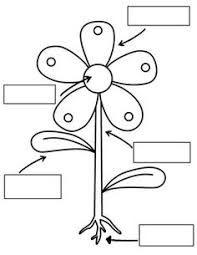 Image Result For صورة اجزاء النبات للتلوين Kindergarten Science Preschool Science Parts Of A Plant