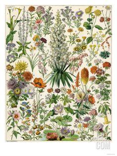 Perennial Garden Flowers, Aster, Daisy, Bleeding Heart, Geranium, Primrose, Phlox Giclee Print at Art.com