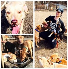 This is Ian Somerhalder from The Vampire Diaries. He loves pit bulls. He has earned my respect.