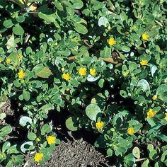 Edible and Tasty...  http://www.survivorninja.com/15-wild-edibles-for-survival/