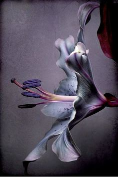 flowersgardenlove: Purple Beautiful gorgeous pretty flowers