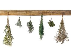 How to Dry Herbs. Full instructions at http://www.vegetablegardener.com/item/2701/how-to-dry-herbs