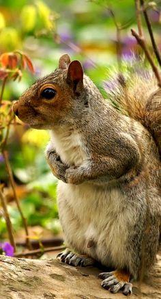 Portrait of Beautiful Squirrel