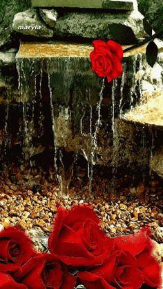 Chuva de Rosas...