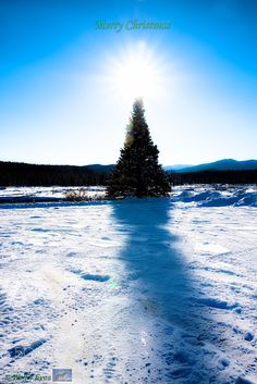 Christmas tree  by yxbeer4 #animals #animal #pet #pets #animales #animallovers #photooftheday #amazing #picoftheday
