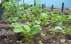 Calendario de siembra y recolección de hortalizas