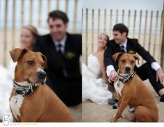 Wedding photos with the focus on the dog and blurred couple in the background from  Erin + Nicks Wedding: A Few Photos photo