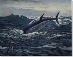 Bluefin Tuna Painting