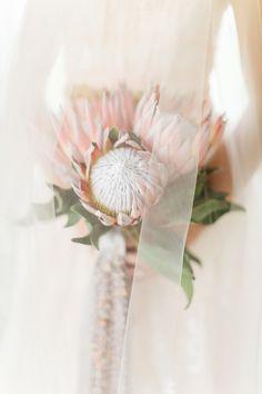 Loving this unique bridal floral bouquet arrangement! Tropical bouquet inspiration and ideas. Protea Bouquet, Floral Bouquets, Protea Flower, Protea Wedding, Floral Wedding, Wedding Bouquets, Wedding Flowers, Blush Pink Wedding Dress, Dress Wedding