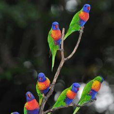Nature Photobook