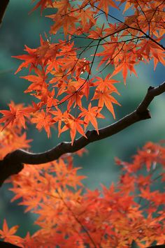 ~~autumn colors by tarox1234~~