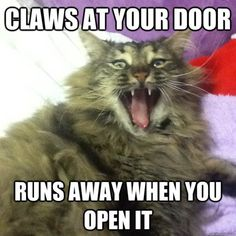 Omg this is seriously my cat pebbles