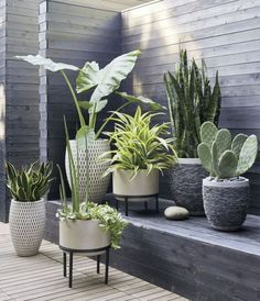 Herva Set of 3 Modern Decorative Ceramic Planters Succulent Plant Pots Ceramic Plant Pot with Bamboo Saucers Stand Holder Flower Plant Pot//Container Fits for Home Office Desk Indoor Decoration