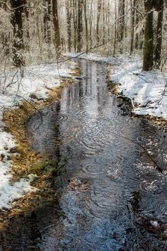 Winter photograph snow stream icy trees water by SherriConley, $30.00
