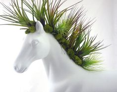 Moss and airplants mane ~ horse planter