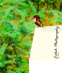 Kingfisher Photo by Ritick Chowdhury -- National Geographic Your Shot