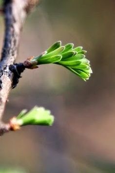 What kind of tree is this? Spring Sign, Spring Day, Early Spring, Spring Green, Spring Colors, Bonsai, Spring Awakening, Flower Bird, Plant Pictures