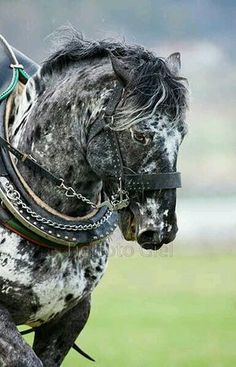 Such a beautiful horse with beautiful eyes !! :)