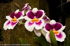 80 Best Crazy Cool Orchids Images Amazing Flowers