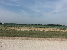 From dirt road 800N looking west  onto a cabbage field