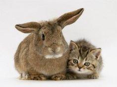 Charming rabbit