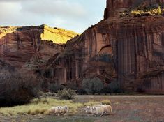 In Canyon de Chelly, a National Monument since 1931. (Navajo Reservation)