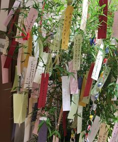 tanabata make a wish