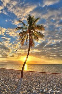 Sunrise in Key West - never been up early enough to see one!