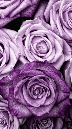 Samsung Wallpaper Floral # Tapete # Tapete Full HD - Best of Wallpapers for Andriod and ios Pastell Wallpaper, Et Wallpaper, Purple Flowers Wallpaper, Floral Wallpaper Iphone, Rose Gold Wallpaper, Cute Wallpaper Backgrounds, Flower Backgrounds, Pretty Wallpapers, Purple Roses