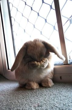 Somebunny's just a little shy. - Imgur