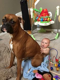 No lap is to small for a boxer! The post No lap is to small for a boxer! & Tap the pin for the most adorable pawtastic fu& appeared first on Dogs and Diana. Dogs And Kids, I Love Dogs, Puppy Love, Cute Dogs, Boxer Dogs Facts, Dog Facts, Boxer And Baby, Boxer Love, Funny Dogs