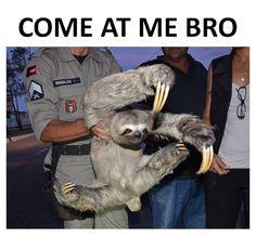 """Ninja Sloth: Come at me bro! - Funny sloth looks like ninja doing """"Come at me bro"""" pose. This reminds me of Abe! Baby Sloth, Cute Sloth, Funny Sloth, Sloth Memes, Sloth Humor, Creepy Sloth, Smiling Sloth, Carter Reynolds, Funny Animal Pictures"""