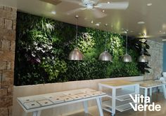 Plants don't just live on the ground, they can live anywhere you imagine.     #VerticalGarden at #SaniDunes   Design and construction by #vitaverde_gr   Technology of Jardines Verticales Paisajismo Urbano