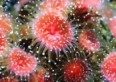 Coral polyps | Coral Polyp | Flickr - Photo Sharing!