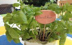 Basilikum – mehr als nur ein Gewürz!