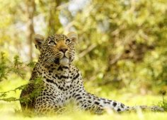Safari Online, Travel Tips, Africa, Tours, Animals, Inspiration, Biblical Inspiration, Animaux, Travel Advice