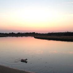 SnapWidget   Tramonto alla foce #tramonto #focedelbevano #lidodiclasse #igersfc #igersdog #ilovemydog #goldenretriever #golden