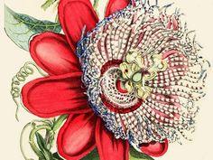 Botanical, Baby V és a tiédhez hasonló 9 másik tábla - xamina@azet.sk
