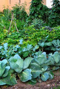 Vegetables Garden, Container Gardening Vegetables, Fruit Garden, Herb Garden, Foot Detox, Victory Garden, Permaculture, Garden Planning, Gardening Tips