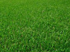 Quelques conseils pour réussir une belle pelouse.