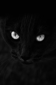 It's just a black cat... they are just like any other color furbaby!!!.