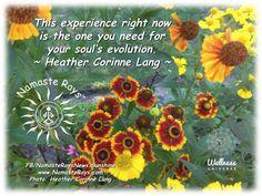 Evolve, transform & awaken. Please follow me: http://www.namasterays.com #wuvip #wellness #wisdom #reiki #spirituality