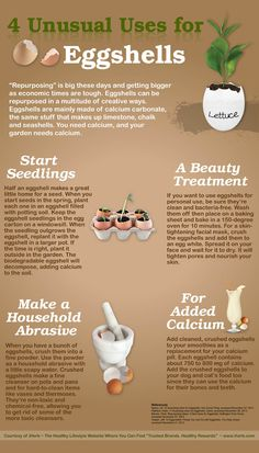 4 Unusual Uses for Eggshells (Infographic)