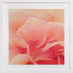 sherbet rose 3 by Niki Digrigorio at minted.com