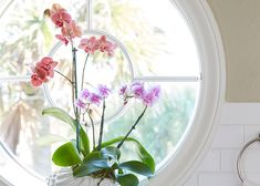 Orchids bloom in brilliant pinks and purples and are perfect for a spring centerpiece or vignette. Check out more Garden Club selections for indoor color.