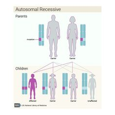 What are the different ways in which a genetic condition can be inherited? - Genetics Home Reference - NIH Scientific Articles, Muscle Weakness, Muscular Dystrophies, Peripheral Neuropathy, Cystic Fibrosis, Ehlers Danlos Syndrome, Cell Membrane, Rare Disease, Research Studies